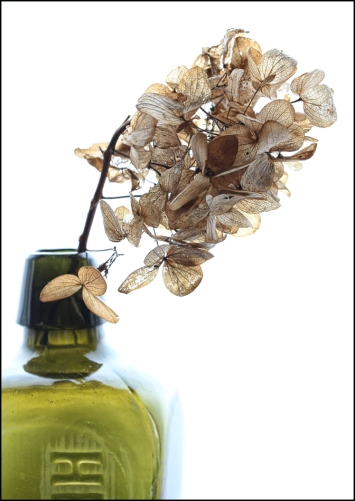 Hydrangea dried 1RZ