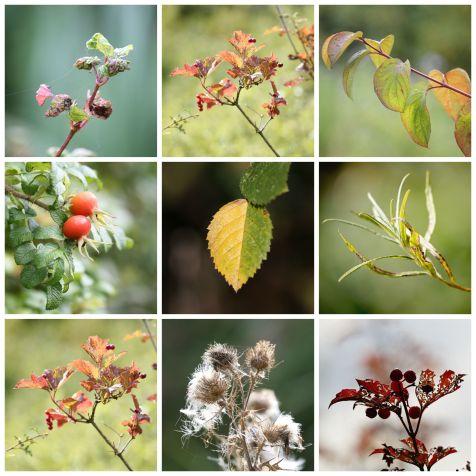 Autumn colours RSPB