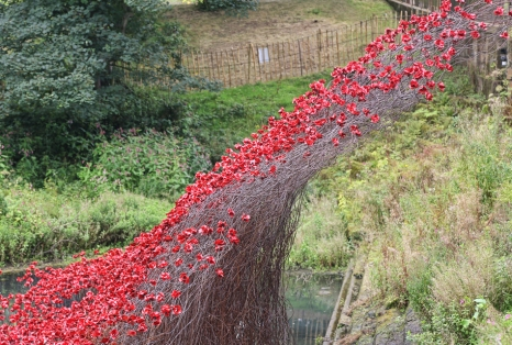 YSP Poppies Wave
